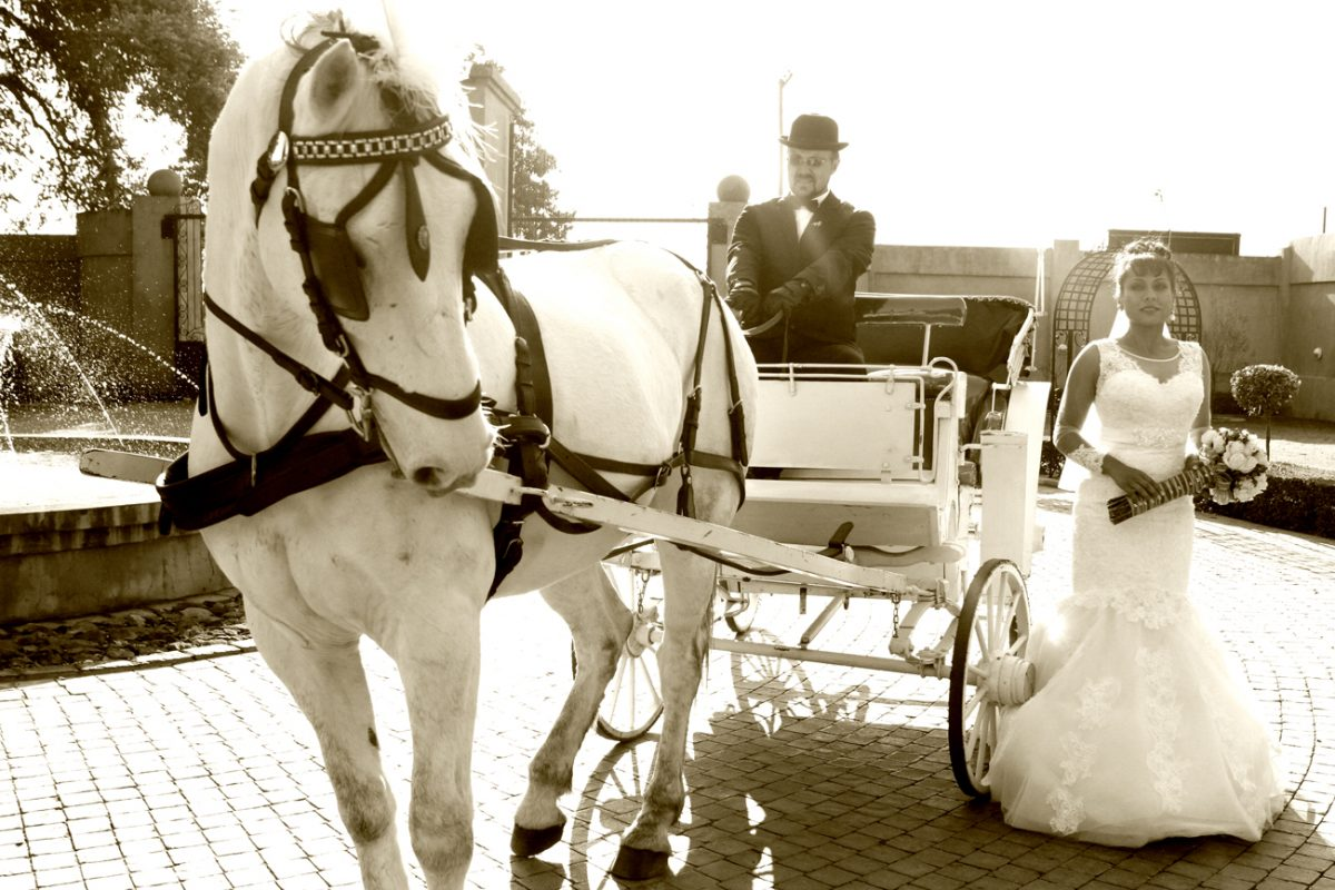 Wedding gallery - bride with horse & carriage at Accolades Wedding Venue